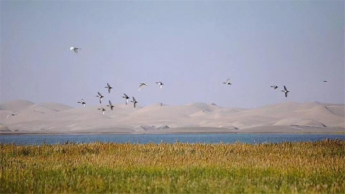 员工摄影作品:廖琴+甘肃西湖之美